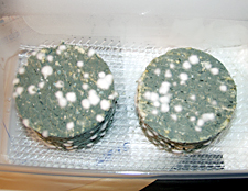 werpers-blue-cheese.jpg